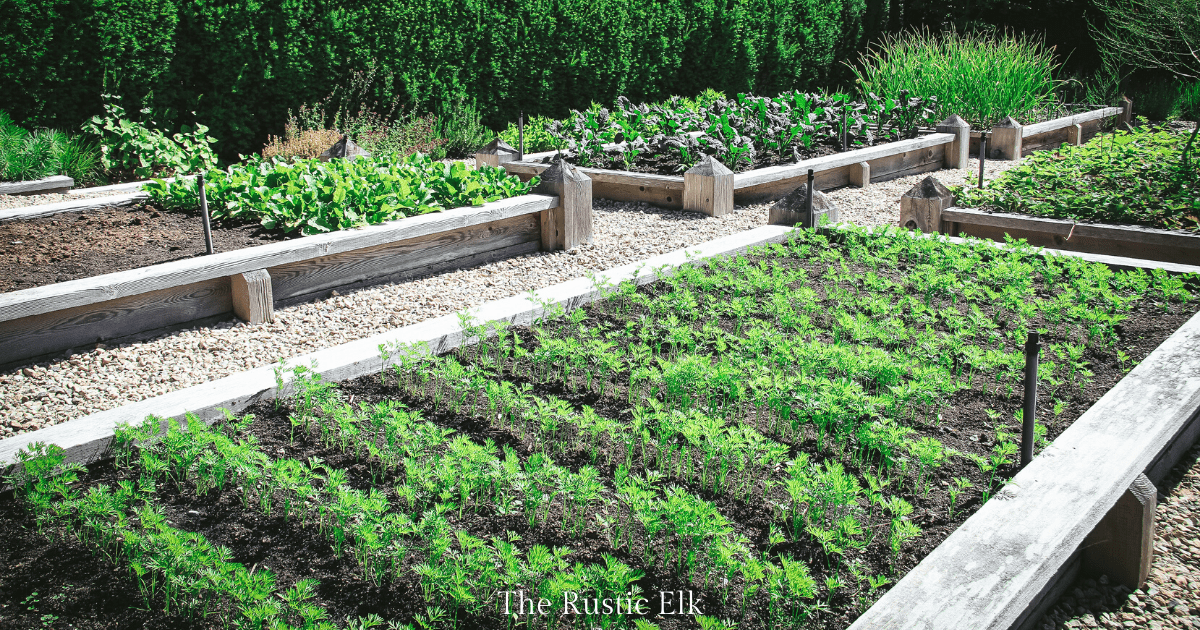 Planning A Raised Bed Garden The Rustic Elk