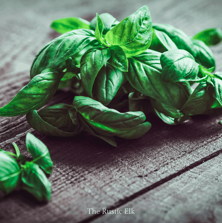 Basil on a table.