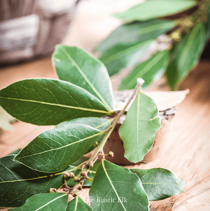 Bay laurel leaves on a table.