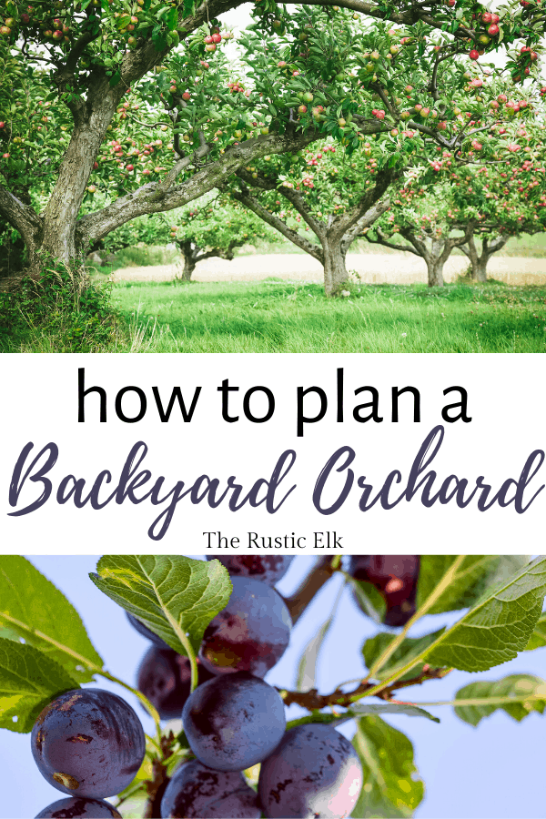 How to plan a backyard orchard.