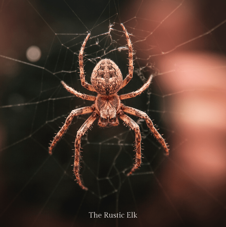 Picture of a spider. Spiders can be repelled, naturally from your home.