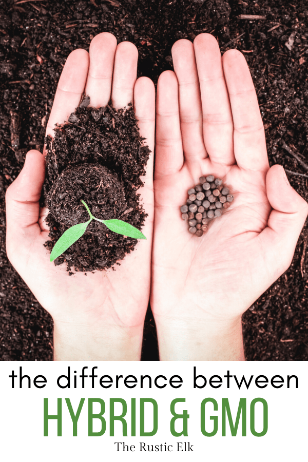 Hybrid and GMO are not synonymous, there's a difference.