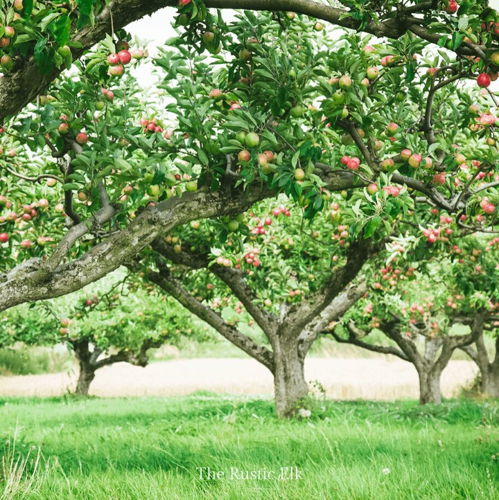 Backyard orchards are easy to plan.