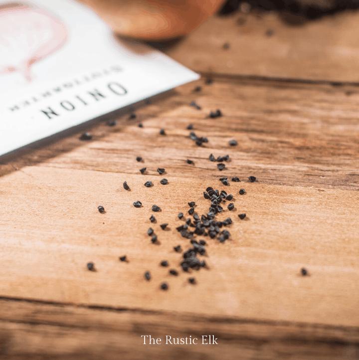 Tiny onion seeds on a table.